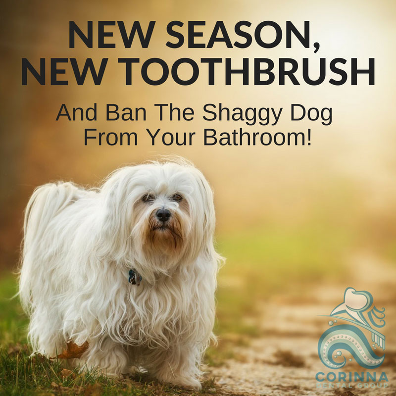 Shaggy dog - New Season, New Toothbrush - And ban the Shaggy Dog from your bathroom